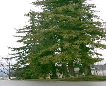 View of St. Oswald's Trees, 2004; City of Surrey, 2004
