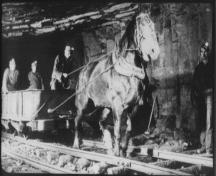 Work horse pulling an orecart holding only miners.  Horses were used to haul empty orecarts back to shovellers waiting to fill them.  Men often rode in the empty carts.  Date unknown.  ; No. 2 Mine and Museum, 2006