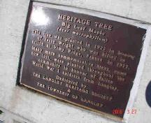 Wright Memorial Maple Tree marker; Township of Langley, 2006