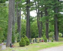 The stately pines of St. Stephen Rural Cemetery; Town of St. Stephen