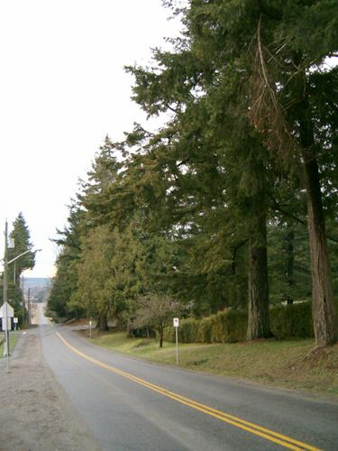 View of Avenue of Trees, 2004.