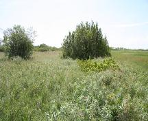 Contextual view of the St. Ambroise Dakota Entrenchment, St. Ambroise area, 2005, with the grasses in the foreground marking the location of the entrenchment.; Historic Resources Branch, Manitoba Culture, Heritage, Tourism and Sport, 2005