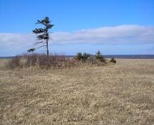 Showing cemetery amid trees and brambles; PEI Genealogical Society, 2006