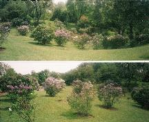 View of the Katie Osborne Lilac Collection at the Royal Botanical Gardens, 2002.; Parks Canada Agency / Agence Parcs Canada, Jamie Dunn, 2002.