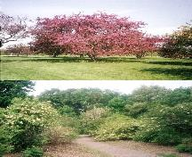 View of the Royal Botanical Gardens, showing the natural approach to landscape design, 2002.; Parks Canada Agency / Agence Parcs Canada, Jamie Dunn, 2002.
