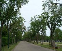 General view of Next of Kin Memorial Avenue, showing the mature trees on either side of the avenue, 2003.; Parks Canada Agency / Agence Parcs Canada, 2003.