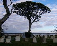 Looking west toward the basswood tree in the Old Port Medway Cemetery, Port Medway, NS.; NS Dept. of Tourism, Culture & Heritage, 2009