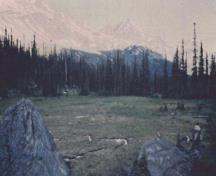 General view of the Athabasca Pass, showing the visual character of the pass, meaning the unimpeded viewscapes of the surrounding mountains and forest, 1998.; Jack Porter, Parcs Canada Agency / Agence Parcs Canada, 1998.