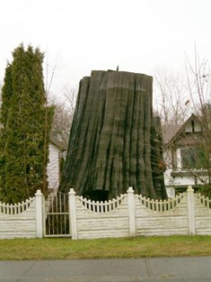 d couvrez vos racines les arbres historiques du canada. Black Bedroom Furniture Sets. Home Design Ideas